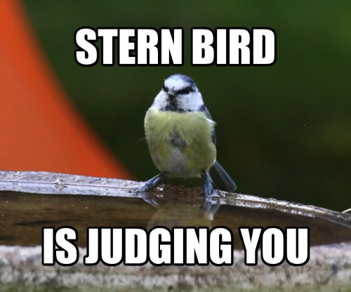 Stern Bird is judging you