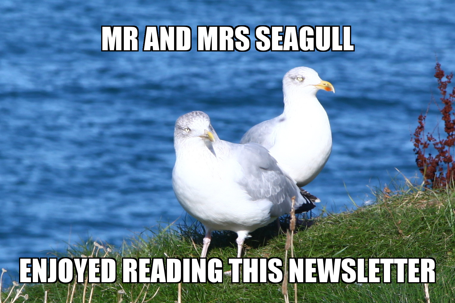 A pair of seagulls from Port Issac