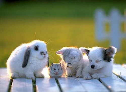 rabbit-mouse-kitten-puppy